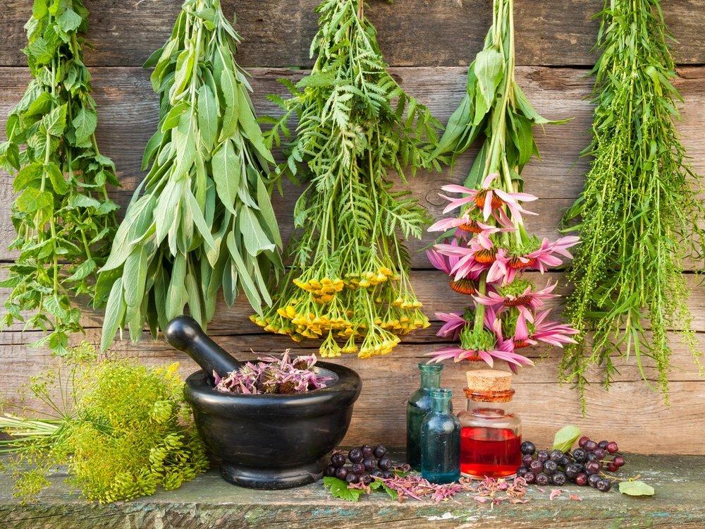 ступка и лечебные травы